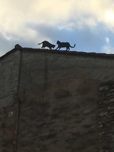 Gats de teulada 1