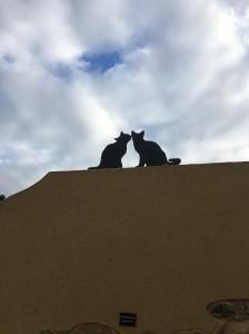 Gats de teulada 2