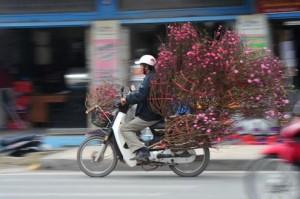 Notícies de Viêt Nam: 23 de gener 2012 - Tê't/Any Nou