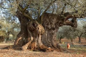 olivera_ximo_la_jana