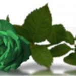 AHIR VAIG ESPERAR DUES DOTZENES DE ROSES