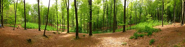 Muziekbos_panoramic