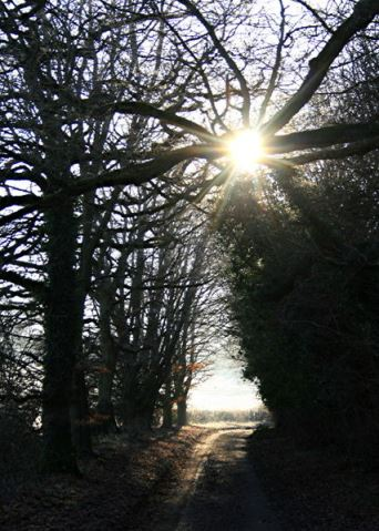 427px-Walking_into_the_morning_sun_near_Humbly_Grove_-_geograph.org.uk_-_1108847 - Còpia