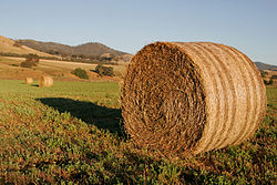 250px-Round_hay_bale_at_dawn02