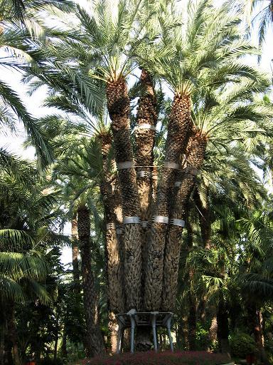 Fanals i palmeres