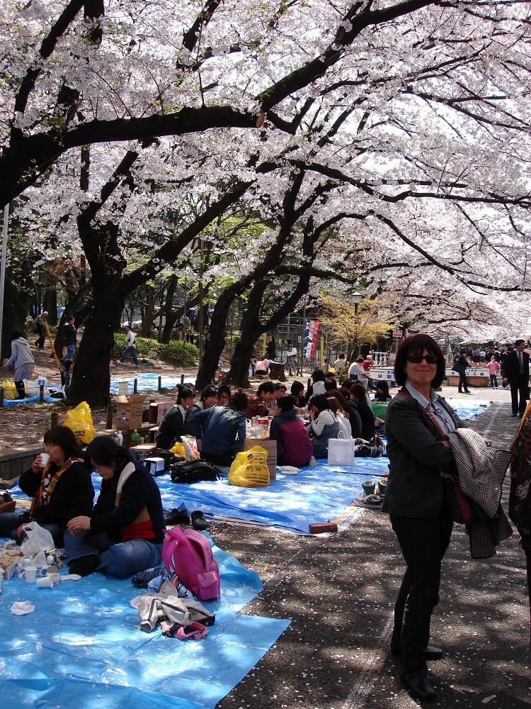 Tradicional pícnic sota els arbres en flor