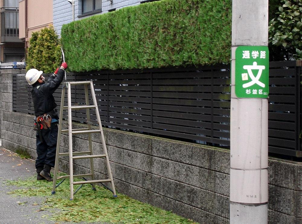 La tasca de jardiner podador, en aquesta època de l'any, dóna feina a molta gent.