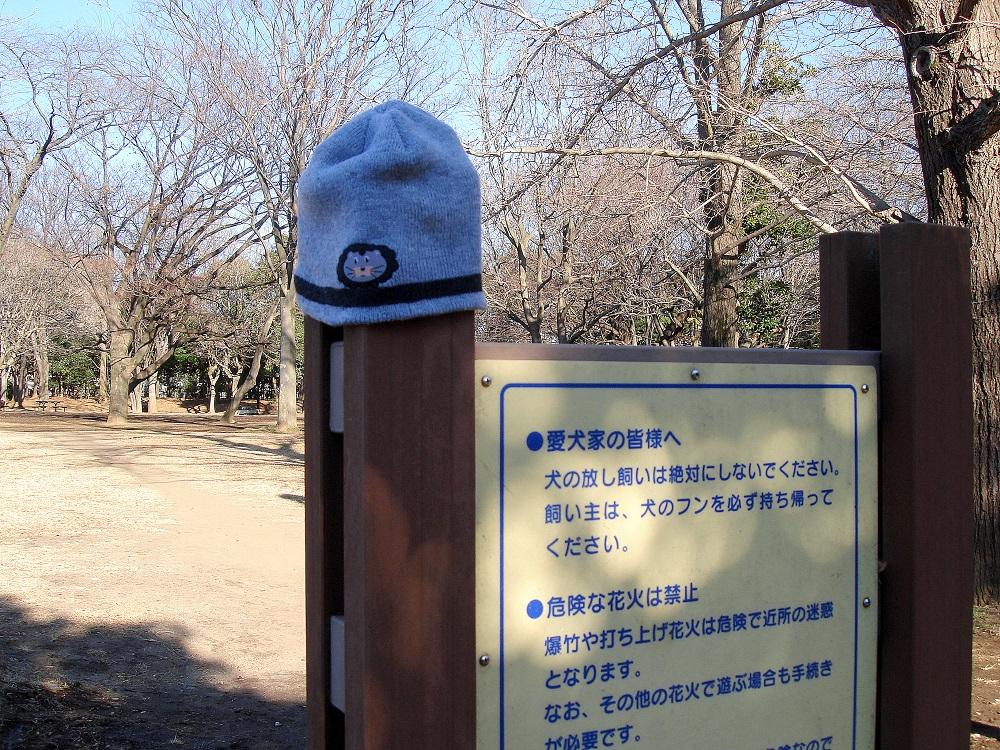 Una gorra infantil perduda en un parc. Algú l'ha deixat ben a la vista.
