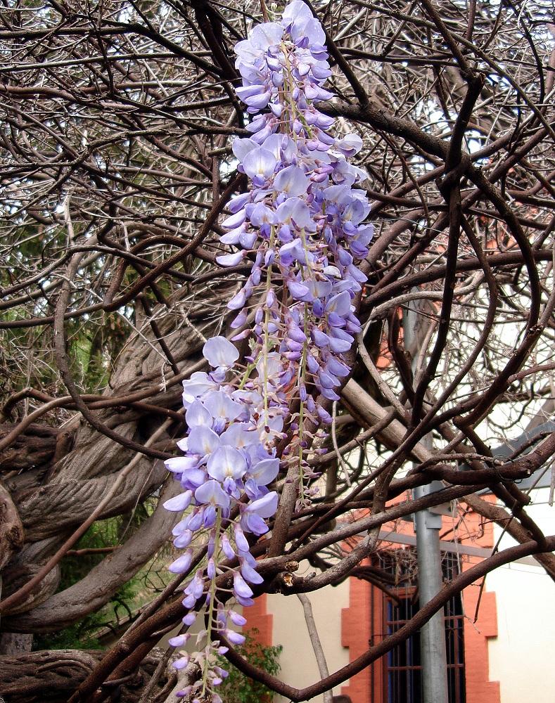 Detall floral de la colònia de Borgonyà. És admirable la cura que en tenen els veïns