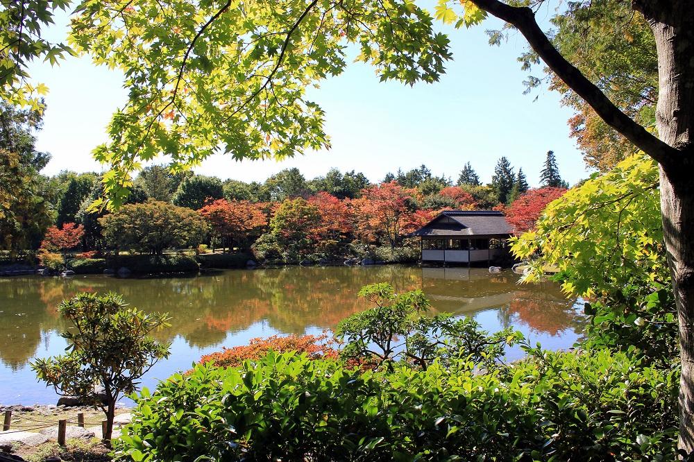 Detall del jardí japonès