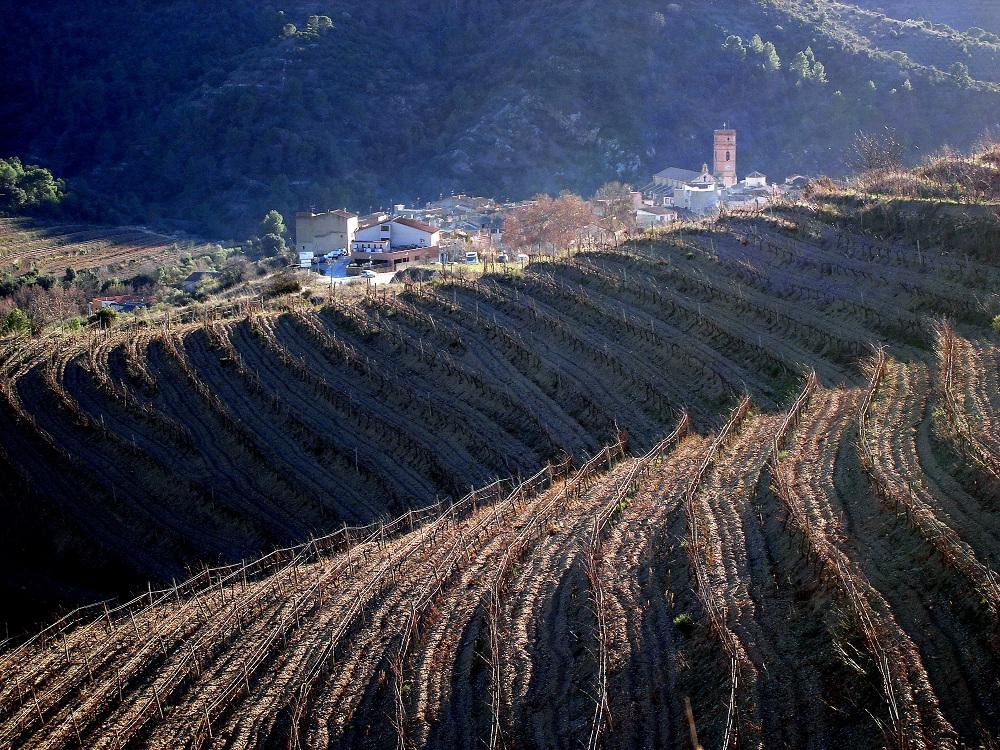 Paisatge de vinyes prioratines tot arribant al final de l'excursió