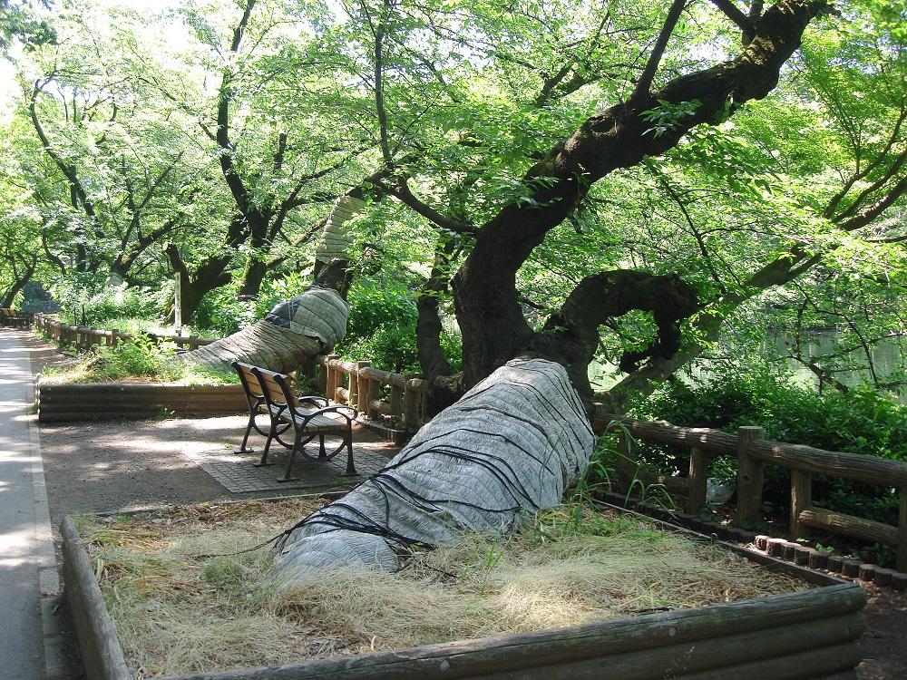 Soques d'arbres protegides de les malures amb materials flexibles i reciclables