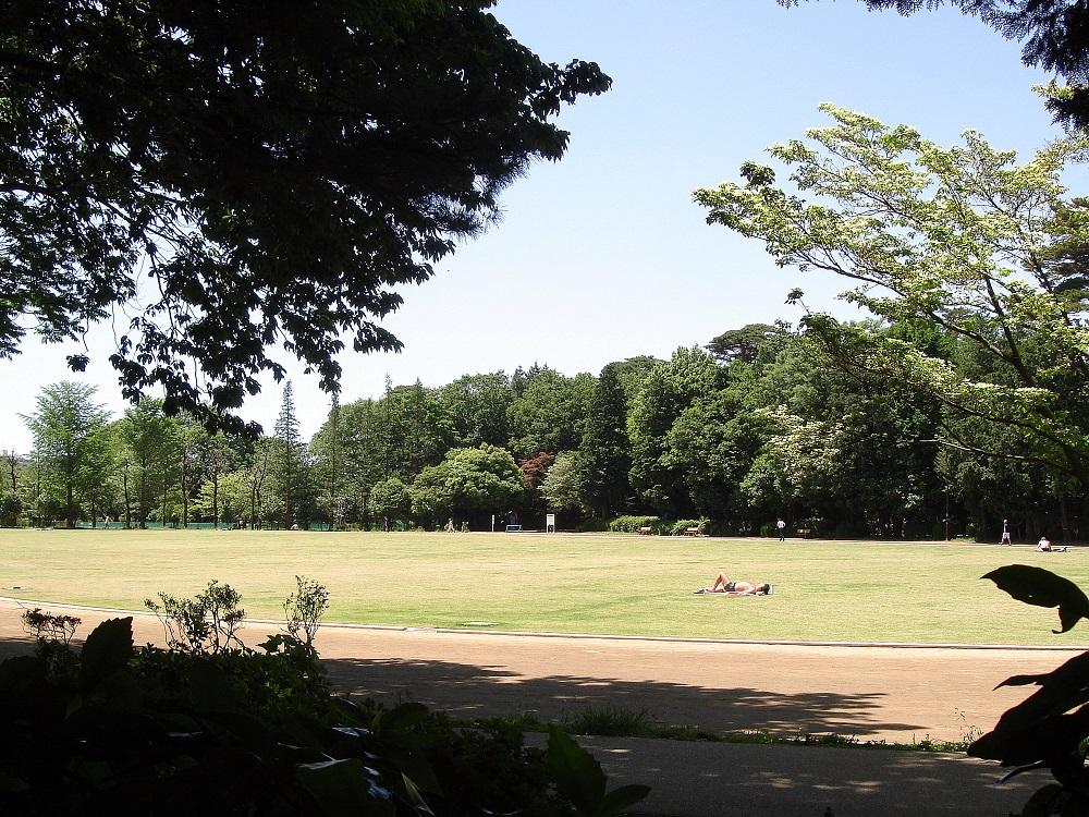 A més de les zones boscoses, també hi ha prats com aquest, on jugar o prendre el sol