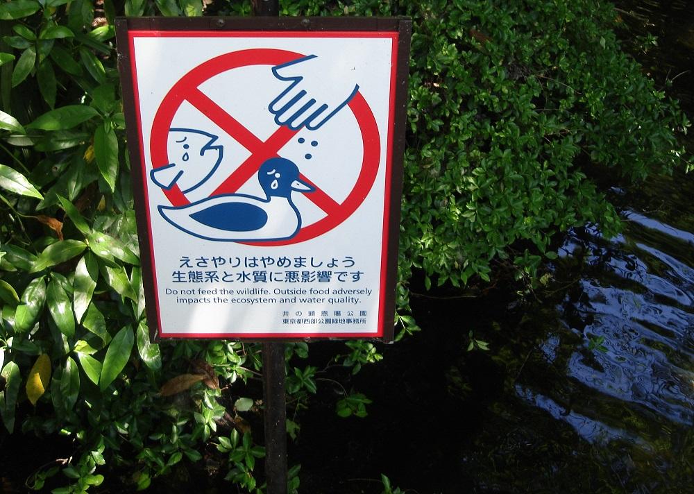 No donar menjar als animals aquàtics. Es contamina l'aigua i s'entristeixen
