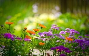 lindas-flores-de-jardin-7760