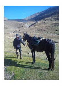 cavall engorgs