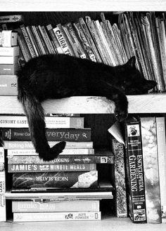 gat i llibres