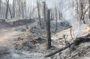 incendi-vilopriu-marc-3