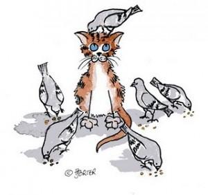 cat-among-pigeons