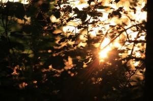 sunshine-4d4564e2-6408-4b0a-bf61-b0e02256a080